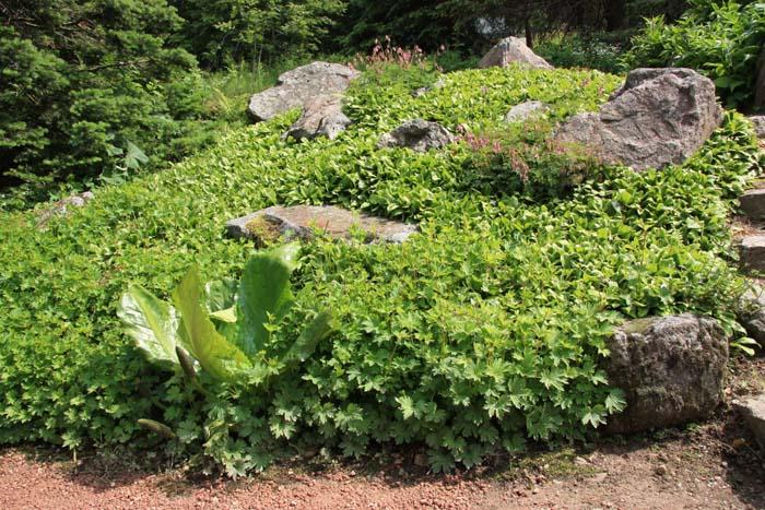 Une rocaille en juillet. Img_5753