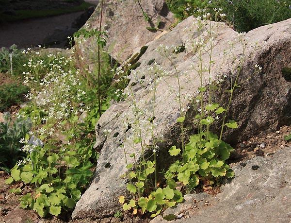 Une rocaille en juillet. Img_5810