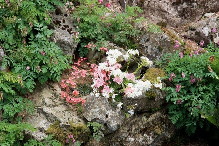 Une rocaille en juillet. Img_5816