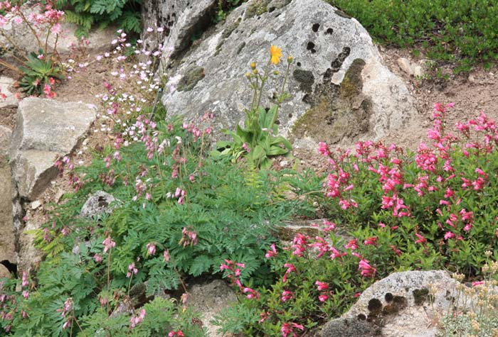 Une rocaille en juillet. Img_5818