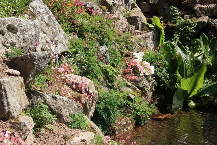 Une rocaille en juillet. Img_5822