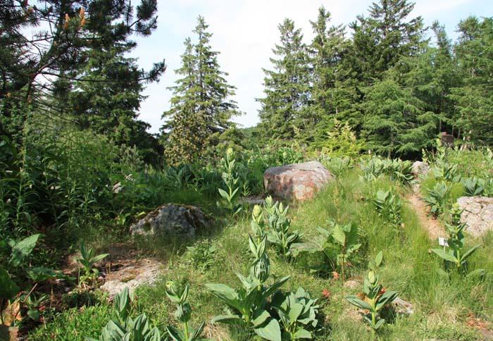 Une rocaille en juillet. Img_5831