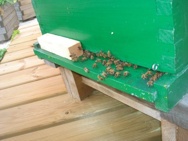 HELP!!!!une ruche sur un toit...........la saga! Mes_ab19