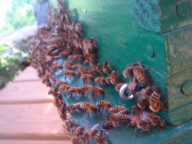 HELP!!!!une ruche sur un toit...........la saga! Mes_ab22