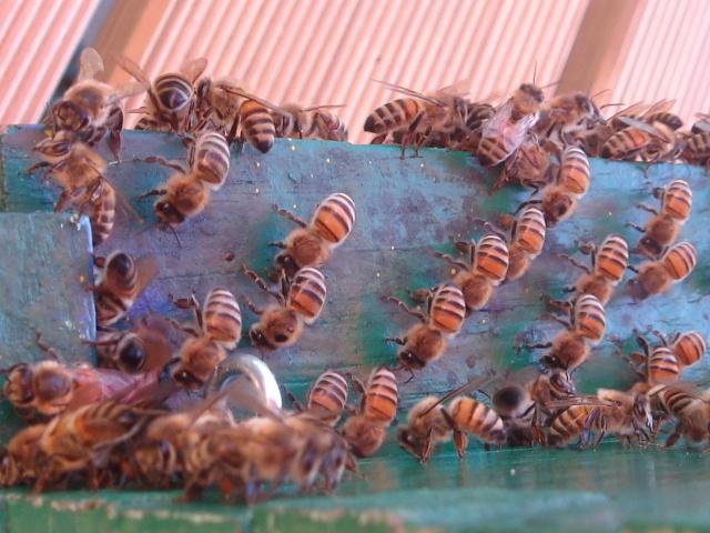 HELP!!!!une ruche sur un toit...........la saga! Mes_ab23