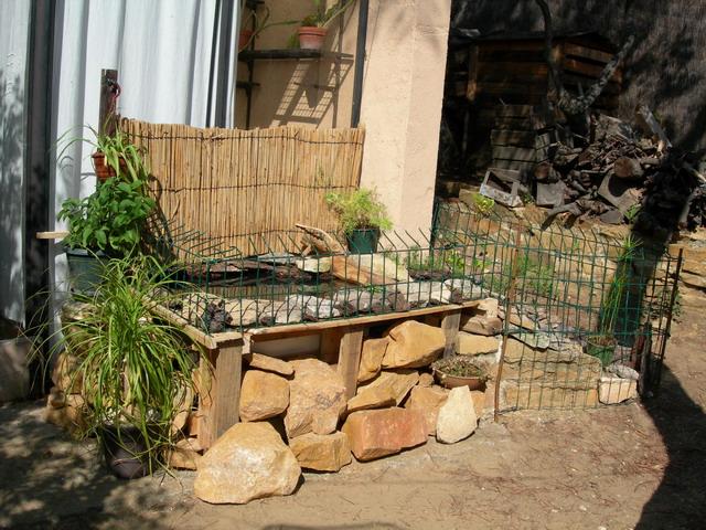 notre bassin pour tortues... Pt_bas13
