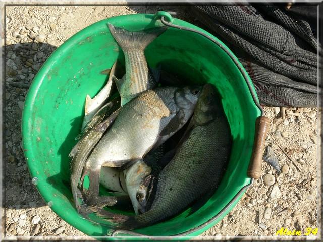 pesca St Gilles Pgjl210
