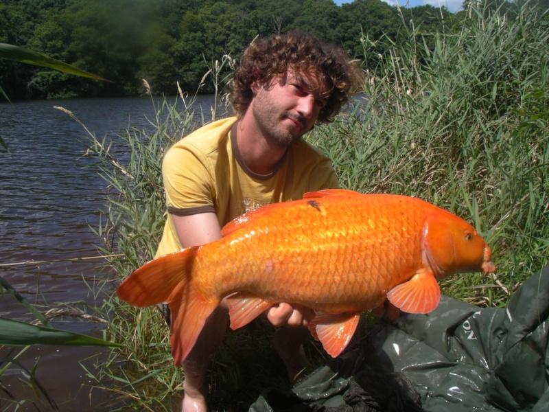 vos plus beau poissons de l année 00000010