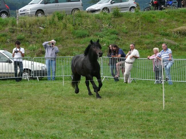 Journée castillonnais 2010 ! P1100912