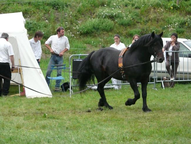 Journée castillonnais 2010 ! P1100913