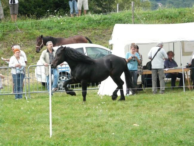Journée castillonnais 2010 ! P1100920