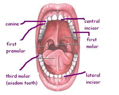 Dentist Badge Dentis10