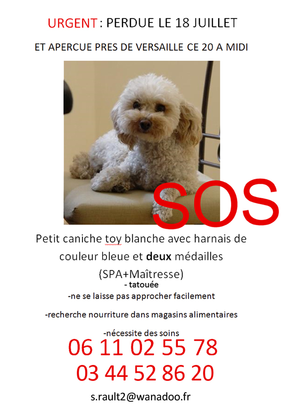 femelle caniche toy blanche dept 78 perdue Odile_10