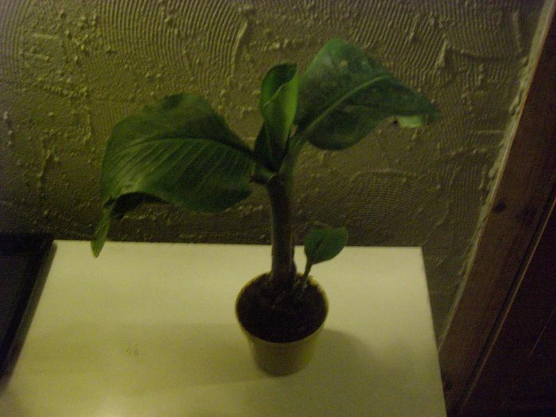 plein de nouvelles plantes Cimg5112