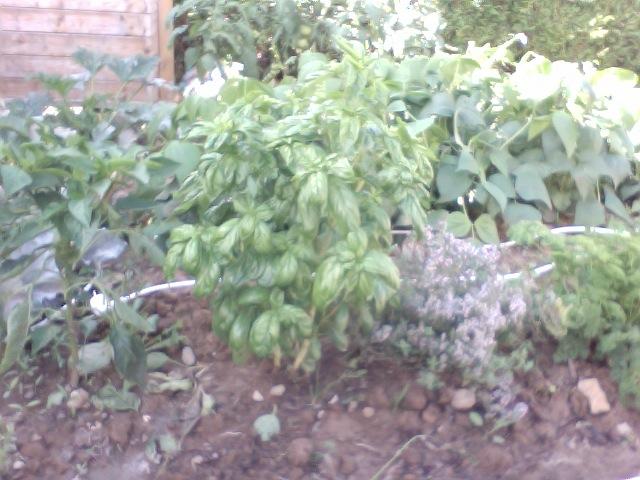 Faire son jardin potager 2010 - 2011 - Page 3 Photo_11
