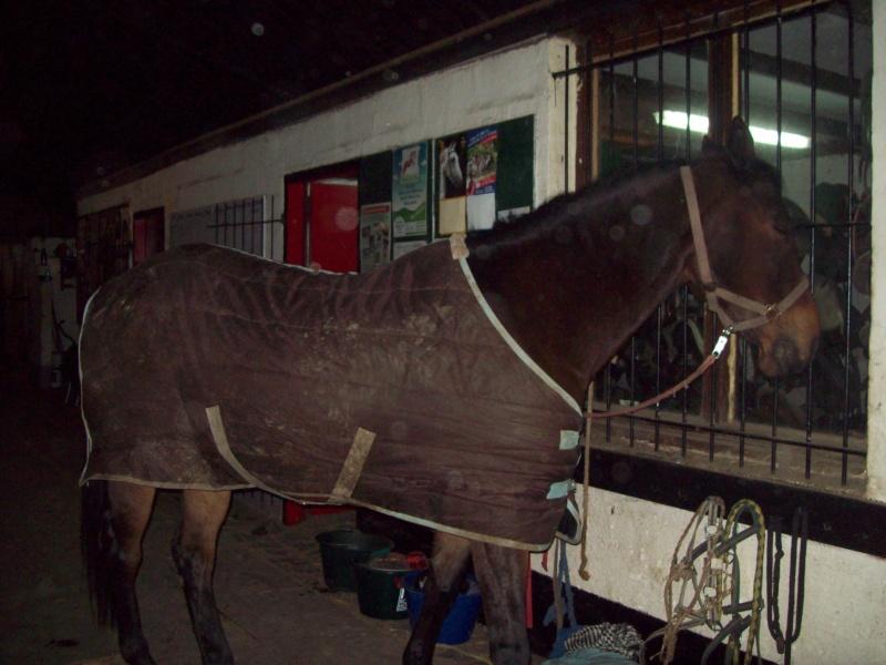 mes cours d'équitation 100_8810