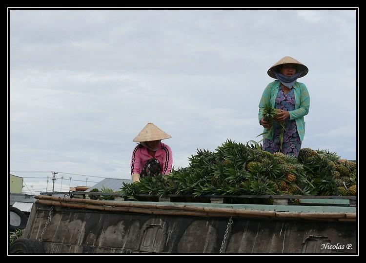 Voyage au Vietnam novembre 2007 (rajout le 21-01-08) P1000713