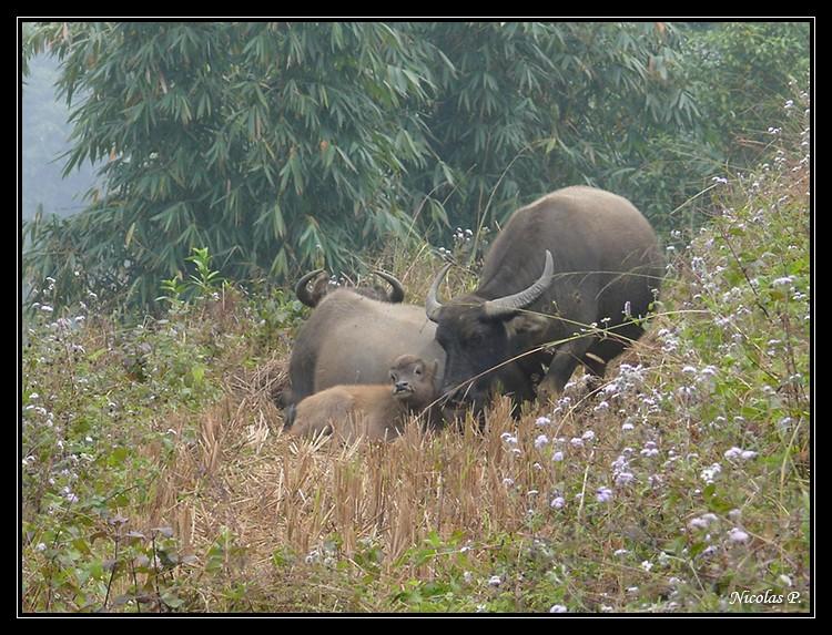 Voyage au Vietnam novembre 2007 (rajout le 21-01-08) P1010611