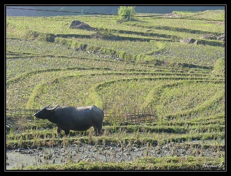 Voyage au Vietnam novembre 2007 (rajout le 21-01-08) P1010812