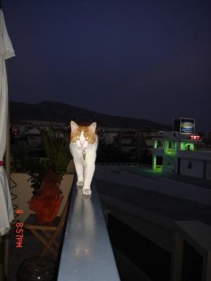 ee7633f82cd6    Αφιερωμένο στο «φευγαλέο» μου γατούλη Παύλα Μάο που ζει για να  «αποδράσει»... Γιατί μια γάτα φεύγει από το σπίτι ...