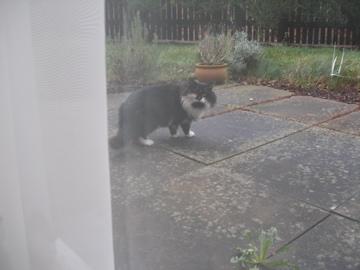 Αγγλό-γατες!!! - Σελίδα 3 P1150210