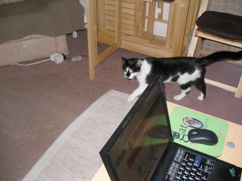 Αγγλό-γατες!!! - Σελίδα 3 P1170210