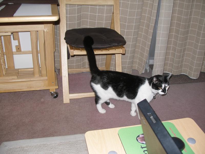 Αγγλό-γατες!!! - Σελίδα 3 P1170211