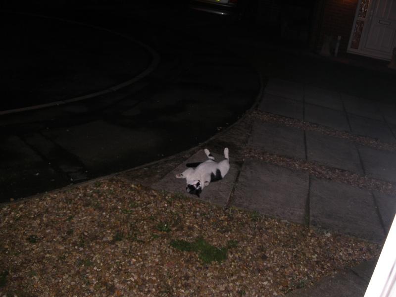 Αγγλό-γατες!!! - Σελίδα 3 P1170212