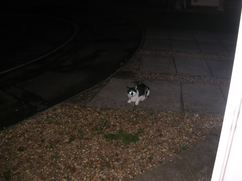 Αγγλό-γατες!!! - Σελίδα 3 P1170214