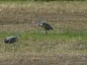 les oiseaux de nos contrées P1000710