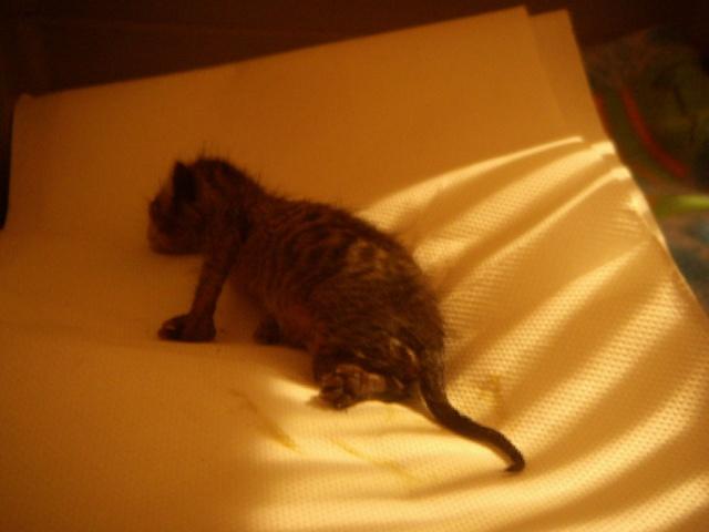 Νεογέννητα γατάκια Vol.2 - Σελίδα 2 Dscn2710