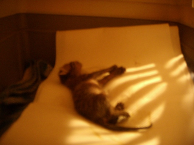 Νεογέννητα γατάκια Vol.2 - Σελίδα 2 Dscn2711