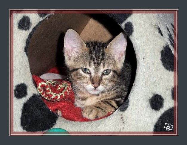 frezbee grand chaton Frezbe10