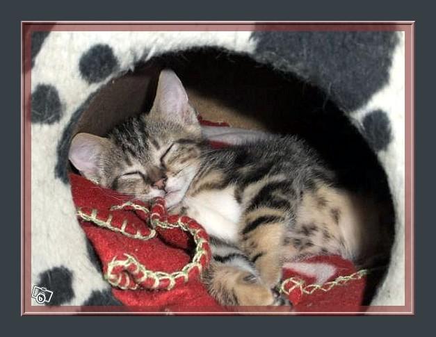 frezbee grand chaton Frezbe11