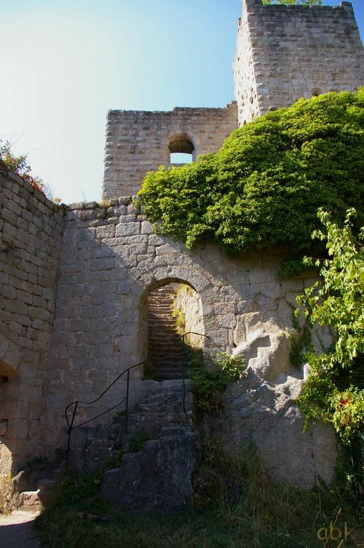 Le Château du Bernstein Bernst15