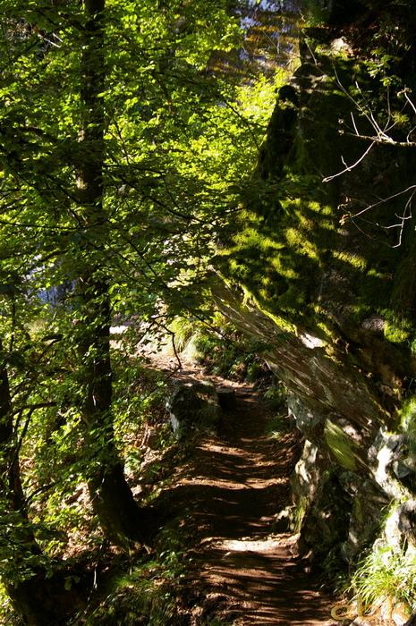 Du Col de la Schlucht au Hohneck, via le Sentier des Roches Imgp2210