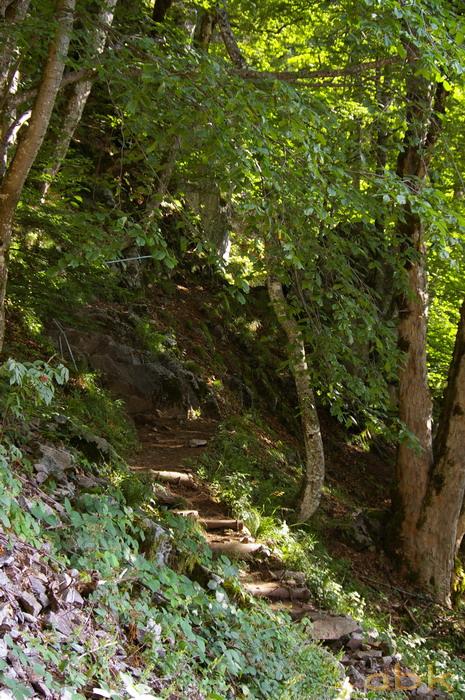 Du Col de la Schlucht au Hohneck, via le Sentier des Roches Imgp2212