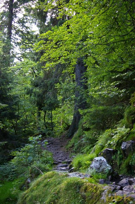 Du Col de la Schlucht au Hohneck, via le Sentier des Roches Imgp2310