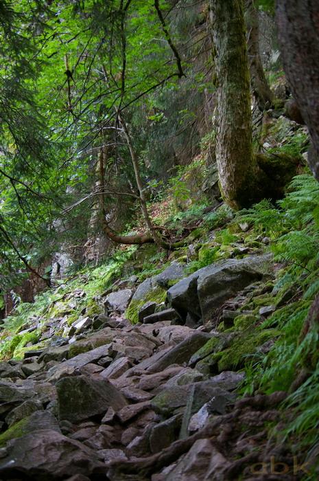 Du Col de la Schlucht au Hohneck, via le Sentier des Roches Imgp2313