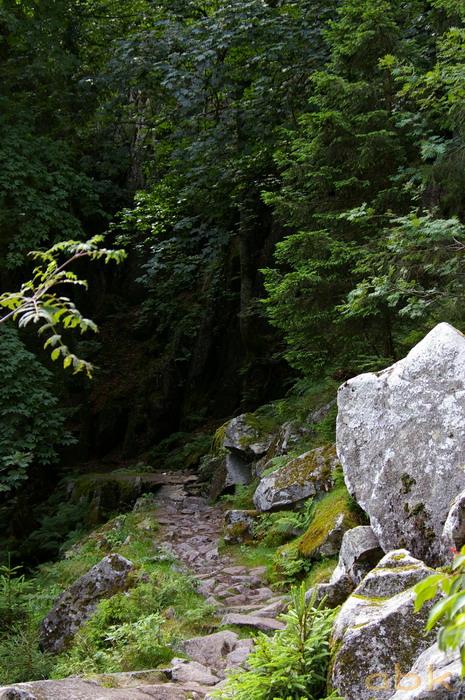 Du Col de la Schlucht au Hohneck, via le Sentier des Roches Imgp2314