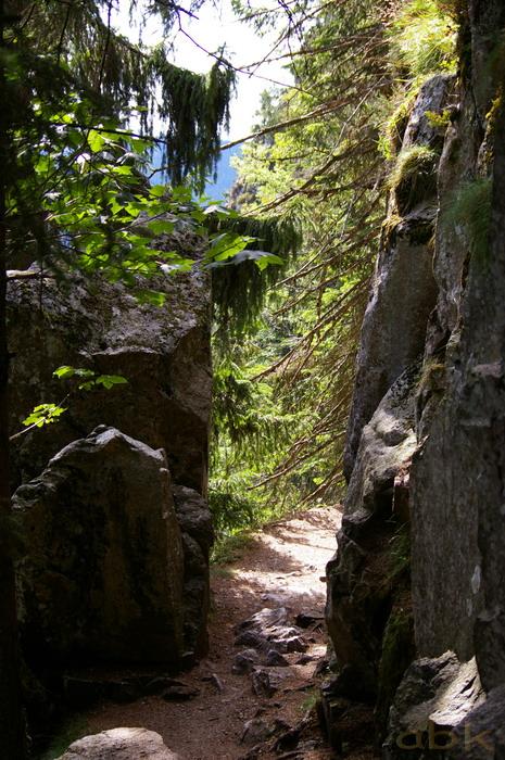 Du Col de la Schlucht au Hohneck, via le Sentier des Roches Imgp2316