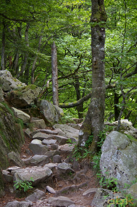Du Col de la Schlucht au Hohneck, via le Sentier des Roches Imgp2414