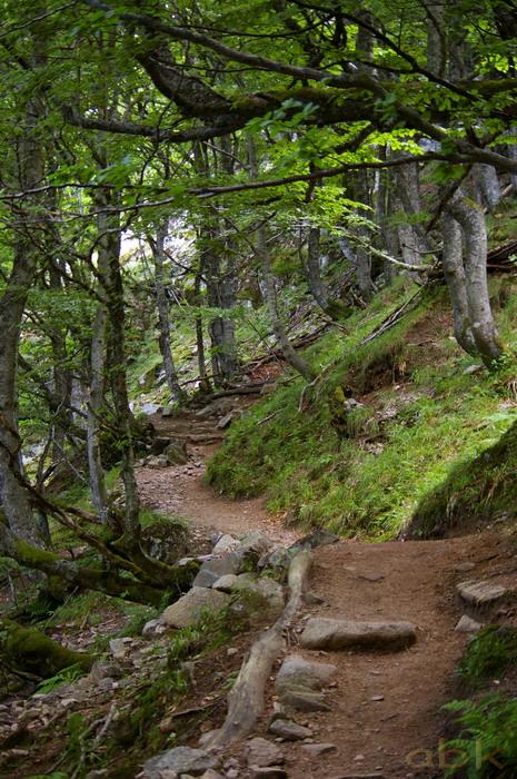 Du Col de la Schlucht au Hohneck, via le Sentier des Roches Imgp2415