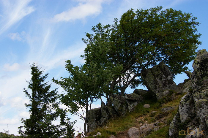 Du Col de la Schlucht au Hohneck, via le Sentier des Roches Imgp2416