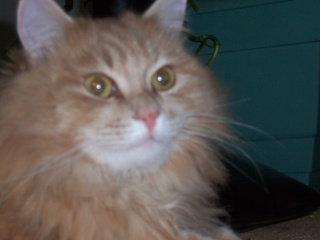 présentation de vos animaux: chats: 100_4713