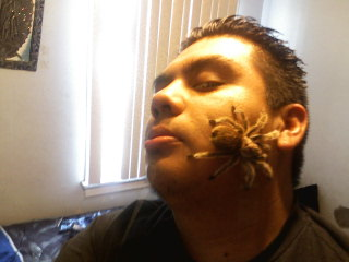 Your Tarantula and Spider pix.... - Page 2 12140710