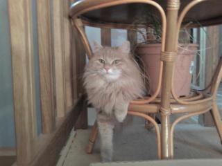 présentation de vos animaux: chats: Sp_a0410