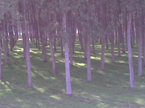 bois à couleur Immag010