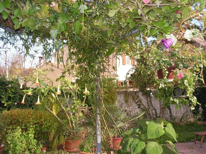 jardin Dr Jekyll 5 décembre 2006   suite Pict0035