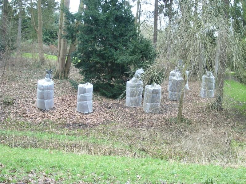 Fougères arborescentes en hiver dans le nord Sl273012